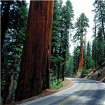 Motorcycle Ride Picture 5 for Yosemite and Sequoia Nat'l Parks