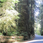 Motorcycle Ride Picture 2 for Northern California Redwoods Loop